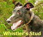 Whistler's Stud